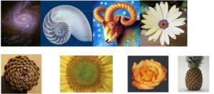 fibonaccinatlh9dk3